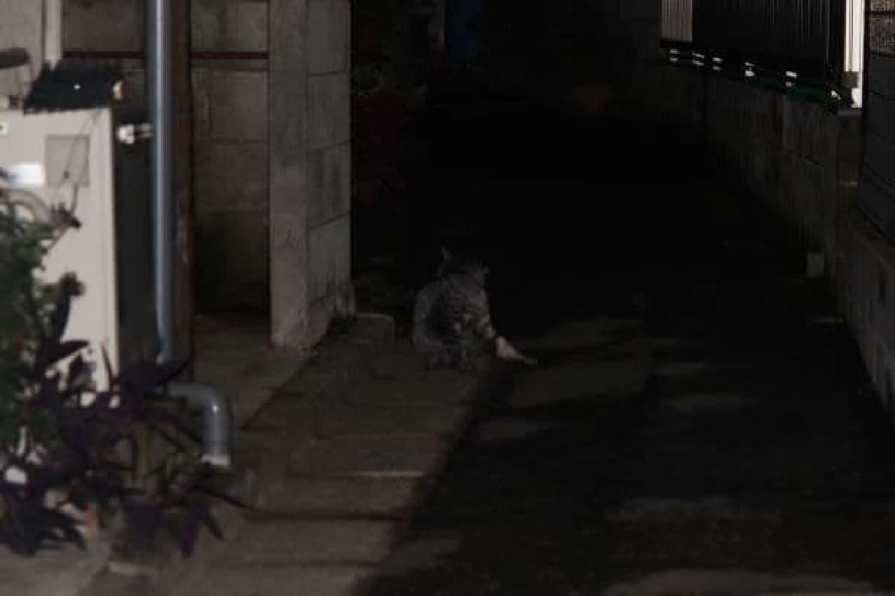 いた!アスファルト迷彩のネコ!