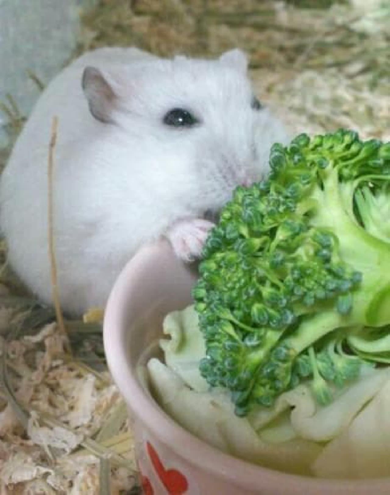 食べていい?ねぇ、食べていい?  (提供:Riku さん)