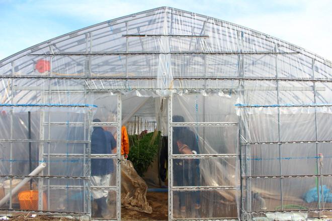 地熱発電を利用して、ピーマン栽培も